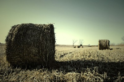 Free Stock Photography - Prairie No. 1
